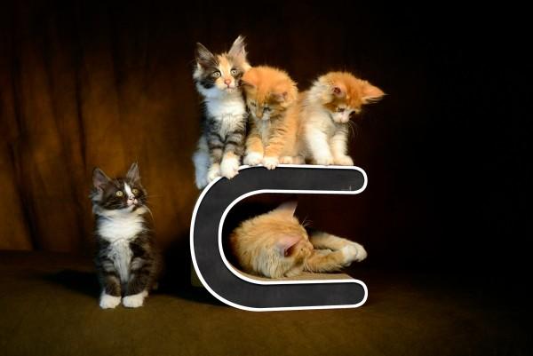 cat-on Kratzmöbel Le Tonneau