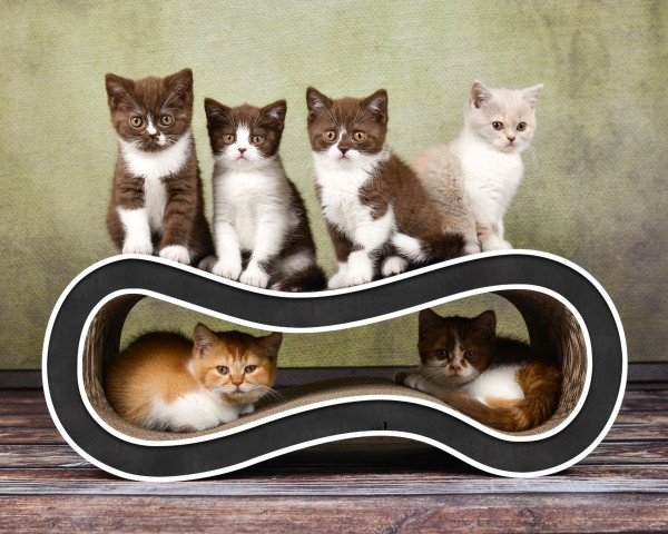 cat-on Kratzmöbel Singha M