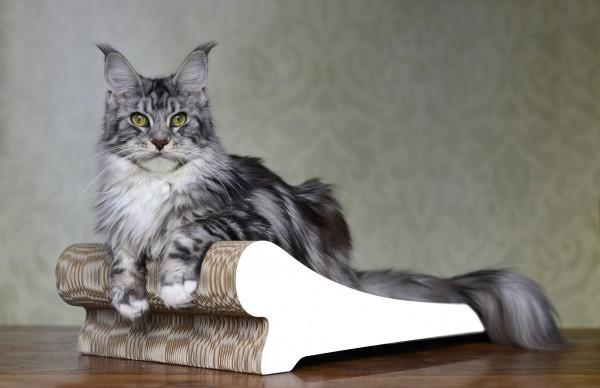 cat-on Kratzmöbel Lounger